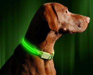 night led dog collar for pitbulls