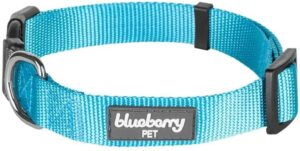 blueberry best collar for doberman