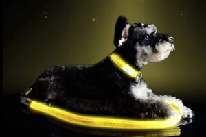 pet industries premium led reflective best dog collar leashes
