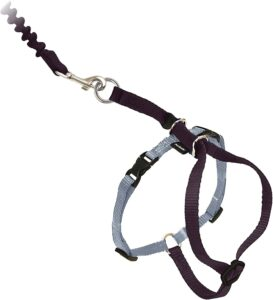 petsafe come with me kitty nylon cat leash and harness